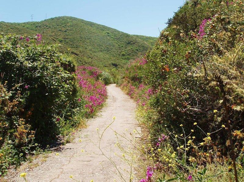 Old Pedro Mountain Road.