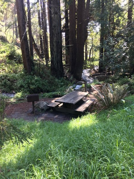 Great picnic spot by the creek