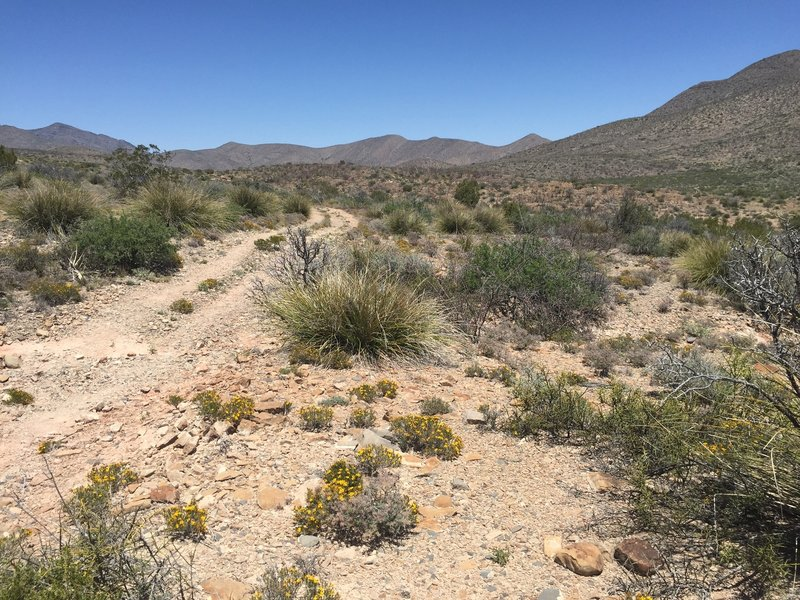 Desert flora is abundant from the Continental Divide Trail.