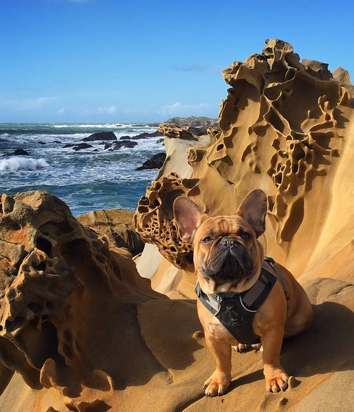 Bruno posing on the sandstone by Franklin Point.