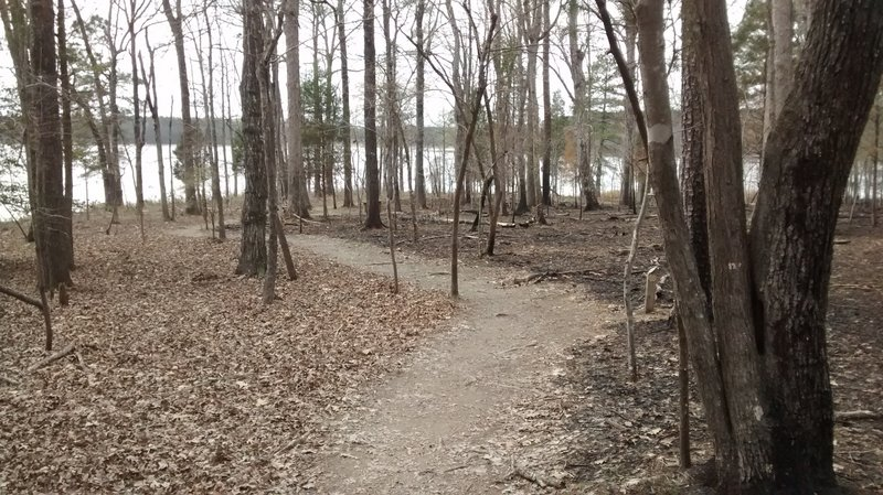 The trail passes through a controlled burn area
