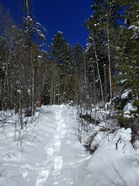 Snowshoeing on 3/20/2016 on the Mountain Lion Trail.