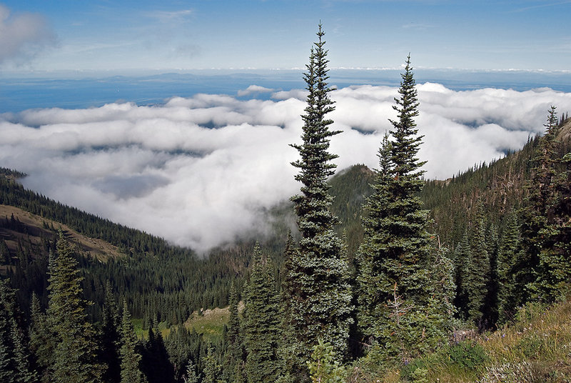 The clouds above hang Dungeness Valley as seen from the Rainshadow Trail. with permission from Ralph Maughan