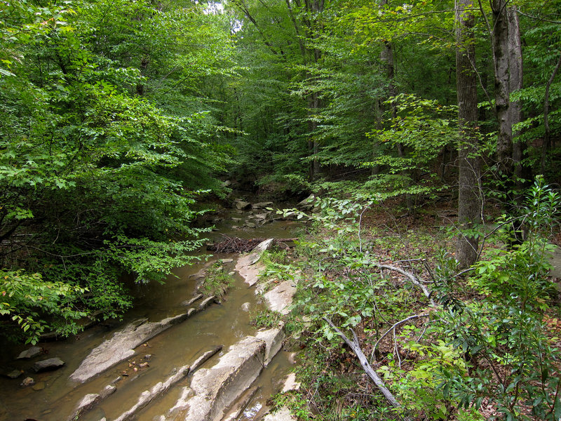 Pott's Branch in William B. Umstead State Park.