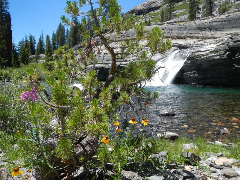 Wildflowers and waterfall along the North Fork San Joaquin River.