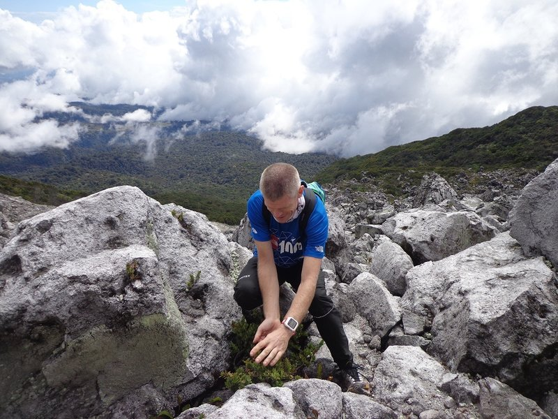 A Norwegian mountain runner enjoying the wild berries at the boulders of Mt. Apo.