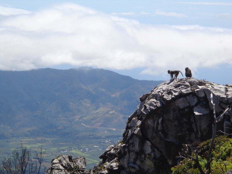 The mountain gods of Mt. Apo.