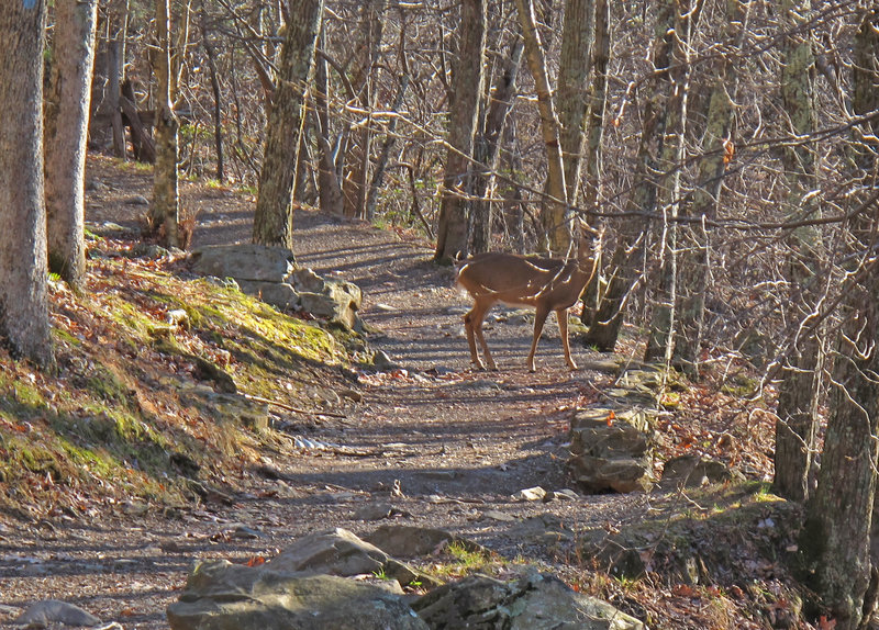 You may spot deer along the trail.
