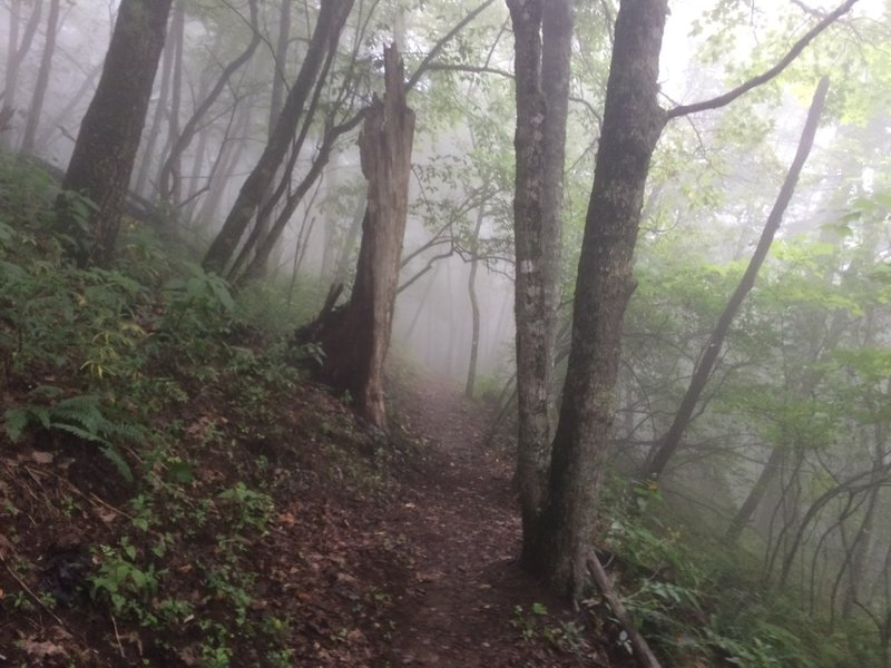 A foggy day on Mountains-to-Sea Trail Segment 2 near Waterrock Knob. Photo by Jim Grode.
