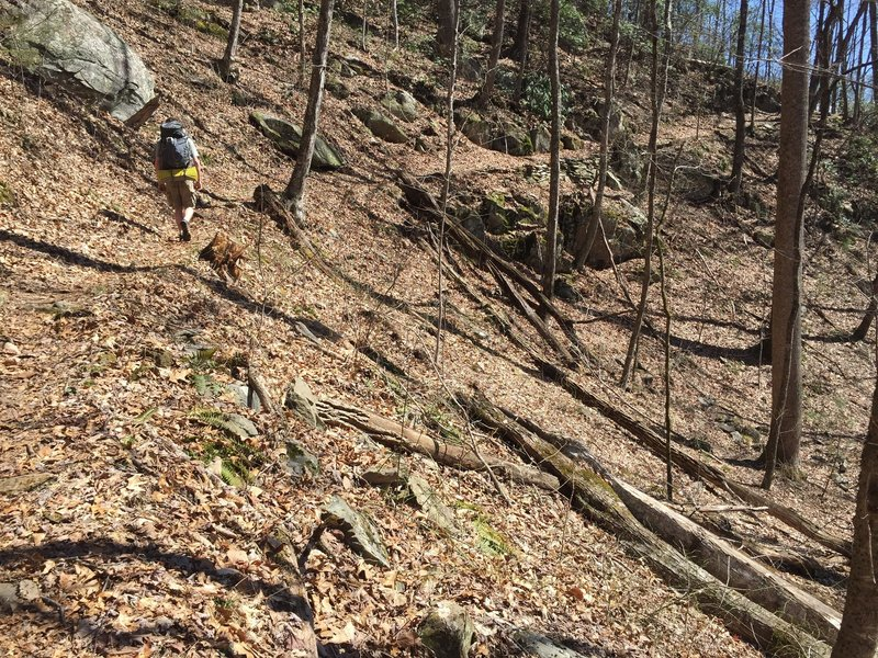 It's a relatively easy hike to campsite 95, with a long winding trail through the forest.