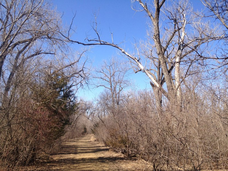 The trail is dominated by large cottonwood trees.