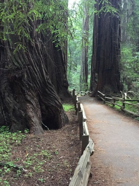 Muir Woods- quiet, cool, fresh forest air - how peaceful.