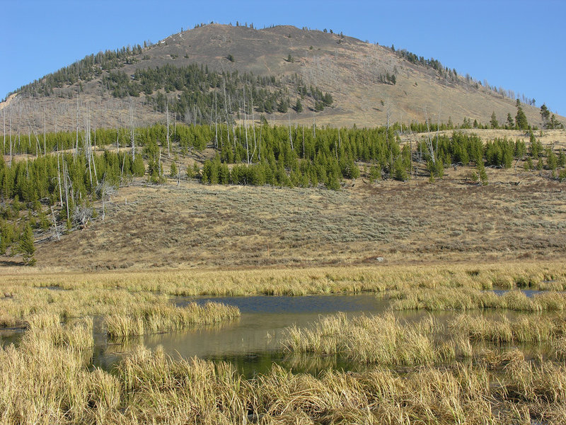 Beaver pond area beneath Bunsen Peak. with permission from Ralph Maughan