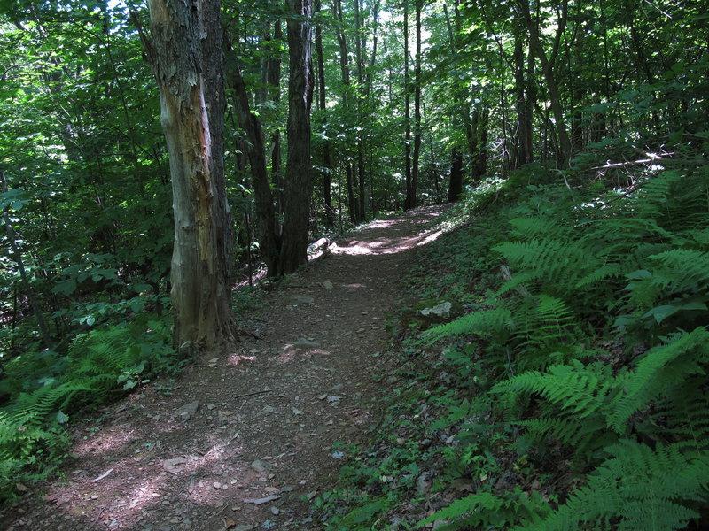 Jones Run Trail.
