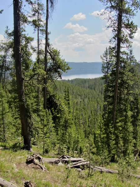 The trail affords occasional views of Shoshone Lake below.