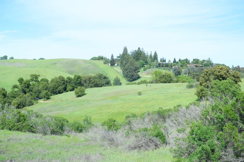 The trail climbs to the hills in the area. Views of the homes in the Palo Alto Hills can be seen from the trail.