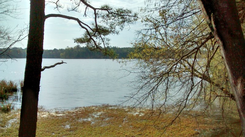 View of Harris Lake.