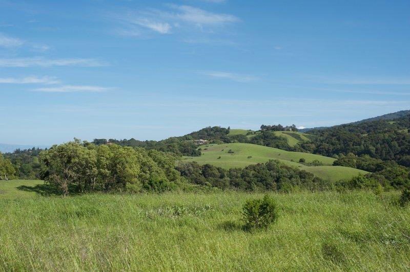 Looking off toward the Palo Alto Hills.