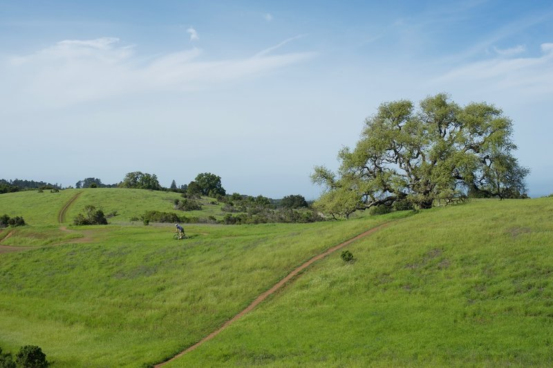 A mountain biker heads off to the Bowl Loop Trail after completing Bowl Loop.