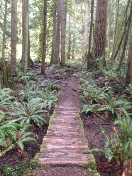 There are lots of great creek crossings like this one, with ferns for miles!