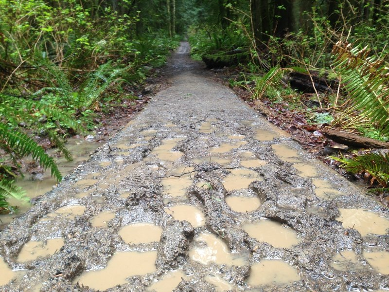 Get ready for a muddy shoe adventure. If you are in Seattle you need to get used to venturing out on the trails in the rain!