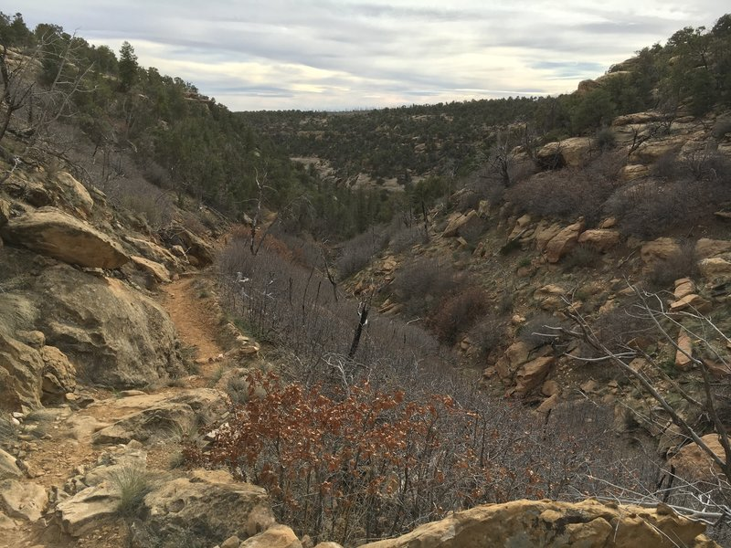 After cruising along the green shady creekbed, you take this mellow climb back up the the dry Mesa top.