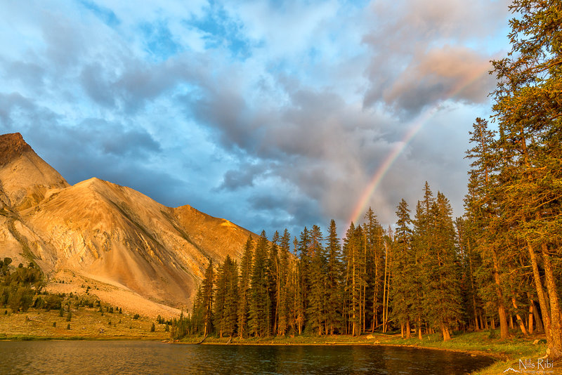 Chamberlain Lake rainbow.