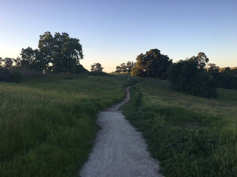 As the trail departs the Meadowlark Trail, it transforms from a gravel path to a narrower dirt path.