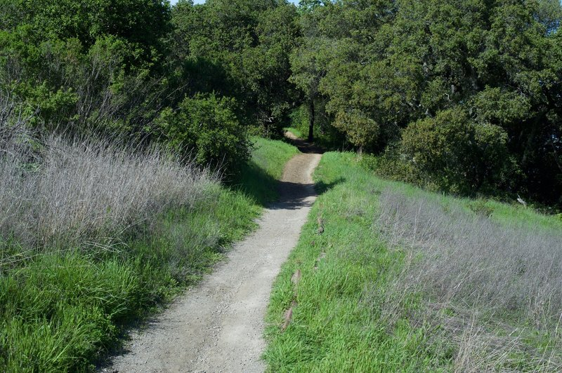 The trail as it climbs from the Arastradero Creek Trail.