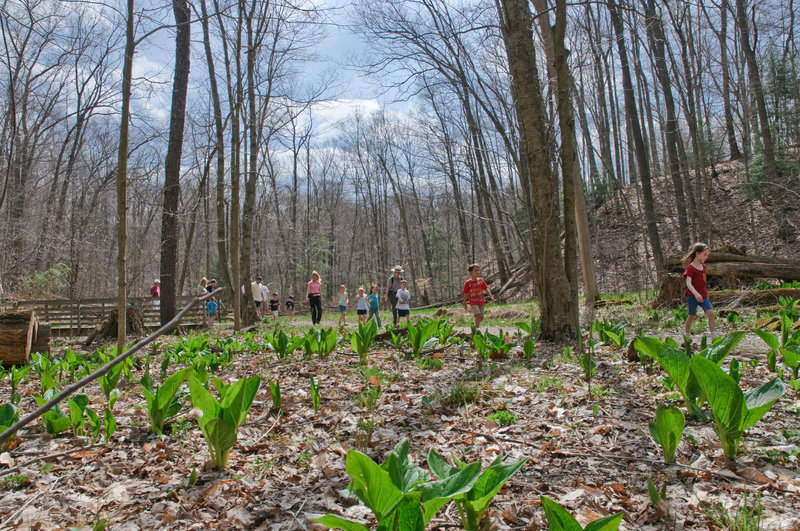 Haskell Run is great for spying spring wildflowers and for families. Photo: NPS Ted Toth.