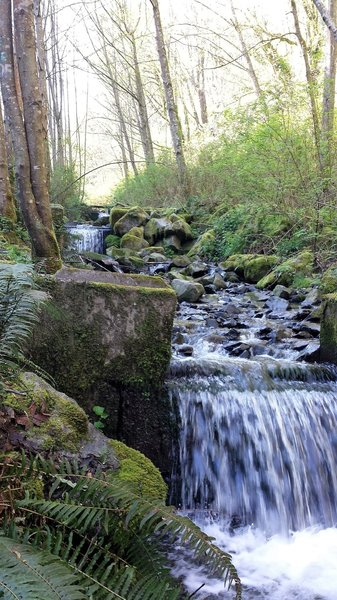 Creek alongside first 1.6 miles