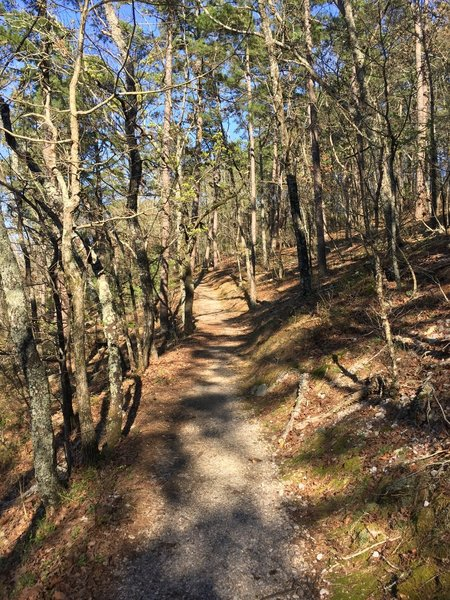 Trail has a consistent grade and is nicely covered with small gravel and packed dirt for the majority of the trail. Some areas have loose gravel and roots.