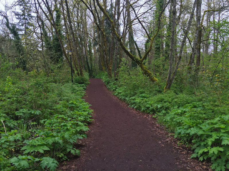 Some of the wooded sections of Pre's Trail feel far from the city.