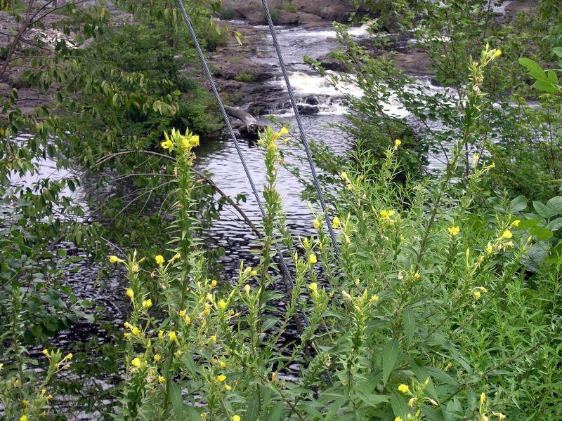 Salmon Falls River, Rollinsford, NH.