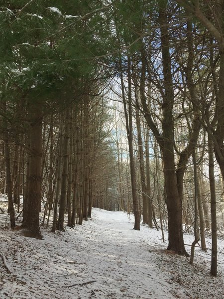 The trail through the woods after a light snowfall at Hildacy Farm Preserve.