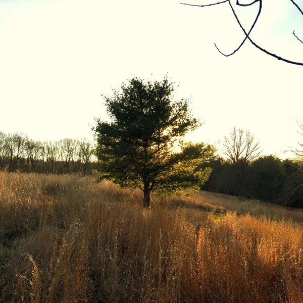A lone tree in the meadow at Hildacy Farm.
