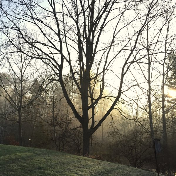 A foggy morning at sunrise at Hildacy Farm Preserve.