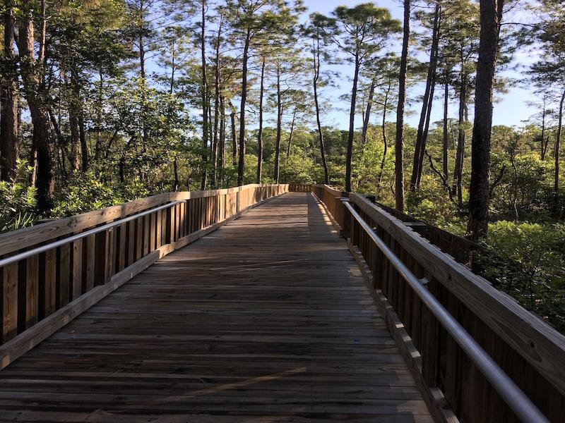 Boardwalk going to Tarflower Trail.