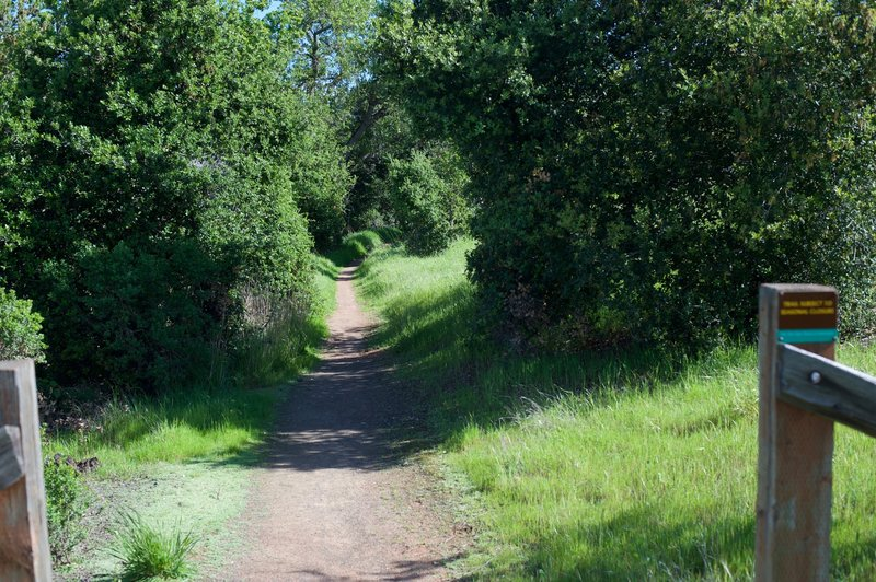 The Woodrat Trail narrows and becomes dirt as it descends from the Meadowlark Trail.
