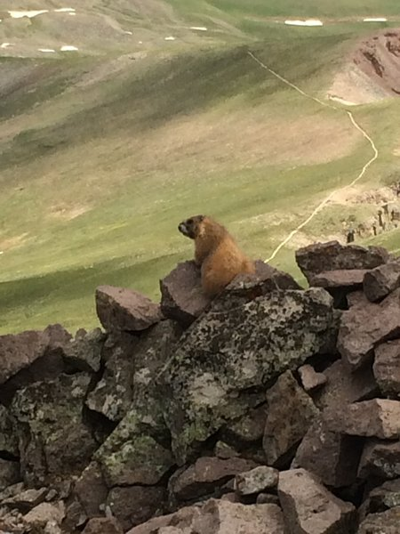 Marmots are common along the trail, and some aren't shy at all.