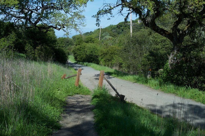 The trail intersection with the Arastradero Creek Trail.