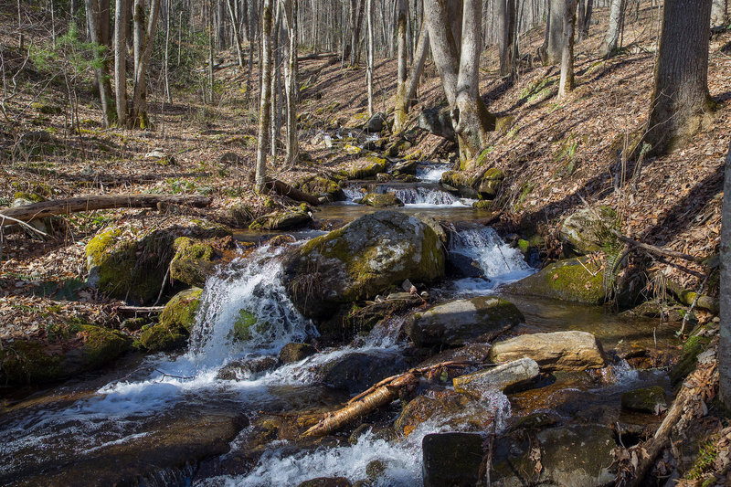 West Fork Fisher Creek at Pinnacle Park on MST Segment 1B. Photo by Jeff Clark, www.internetbrothers.org.