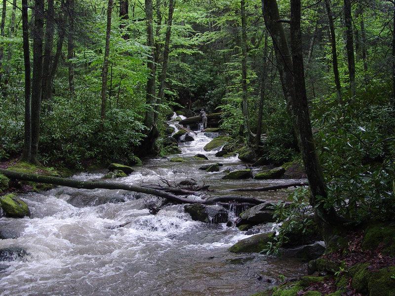 Goshen Creek on MST Segment 5. Photo by Shelton Wilder.