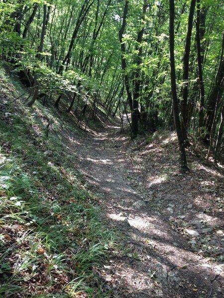 The shady trail to Mandra