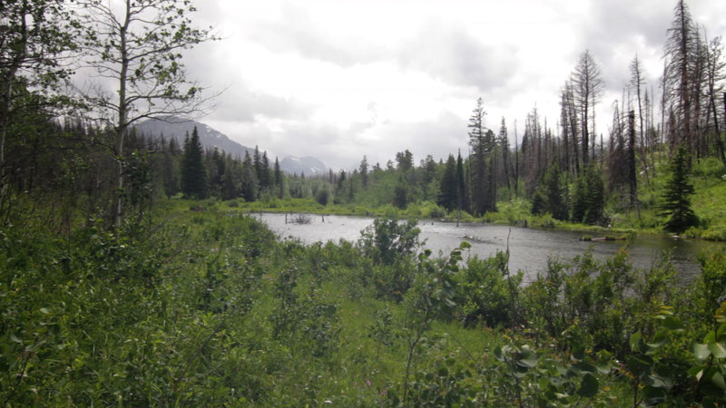 View of Beaver Pond