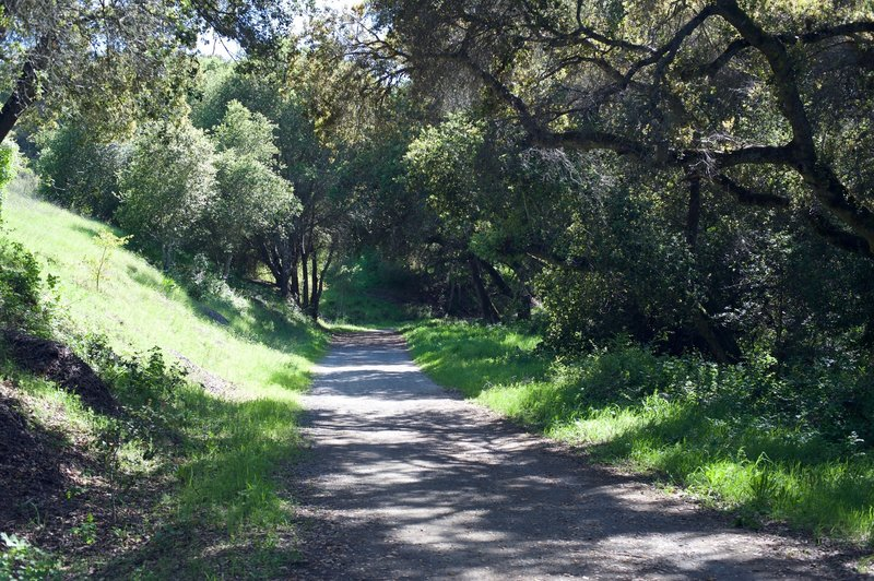 The trail as it departs the Arastradero Trail and continues to follow the creek bed.