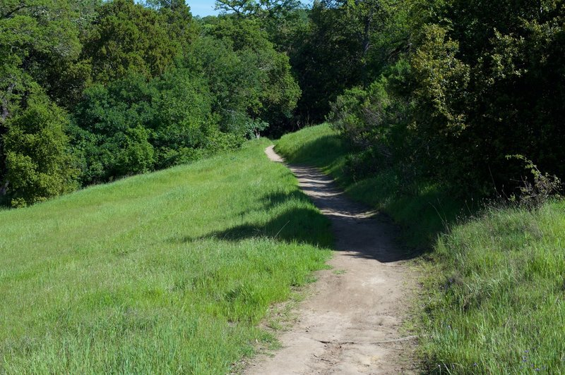 The trail climbs before hitting a switch back. It's a little rough in some places, but otherwise it is an easy climb.