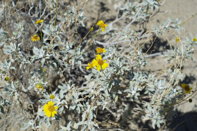 Small yellow flowers can be seen along the trail in the spring.