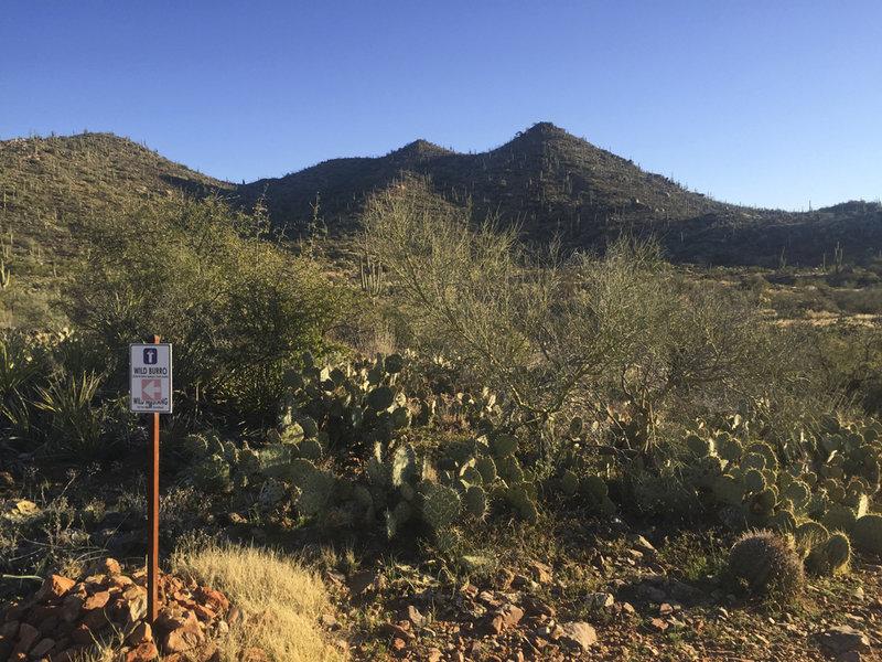 Cactus and rocks are plentiful along the singletrack trail.