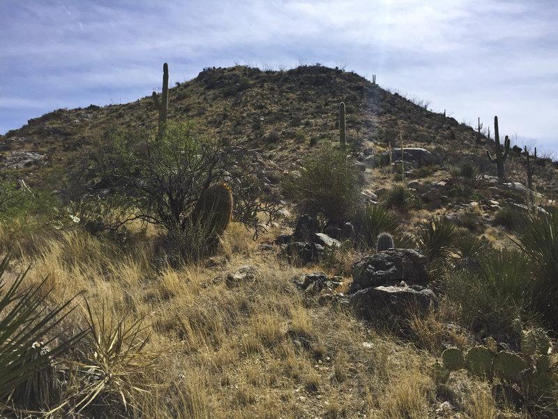 Great desert topography with saguaros among the hillside vegetation.